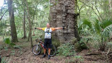 Photo: it's a Big Oak