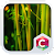Beautiful Nature Forest Theme file APK Free for PC, smart TV Download