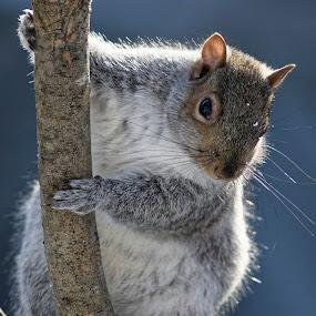 by Luc Raymond - Animals Other Mammals