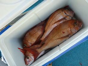 Photo: タムラさんのクーラーBOX、その2。 合計真鯛20匹でした!