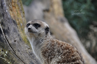 Photo: at the zoo ....