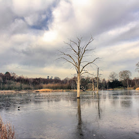 The Lone Tree by Michael Topley - Landscapes Waterscapes ( water, clumber park, uk, england, tree, nottinghamshire, clumber, midlands, lake, britain )