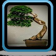 Japanese Bonsai Tree Ideas icon