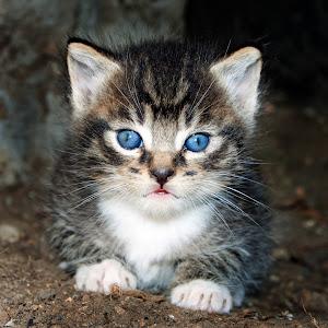 kittykitty.jpg