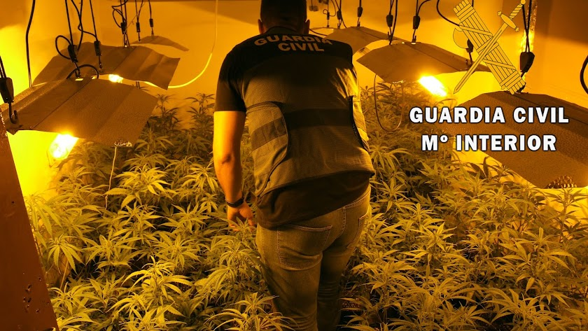 Plantación de marihuana encontrada en una vivienda familiar en Adra.