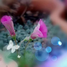 Butterfly Dream by Teo Nino Antunović - Digital Art Abstract ( digital photography, butterfly, bokeh, digital art, flower )