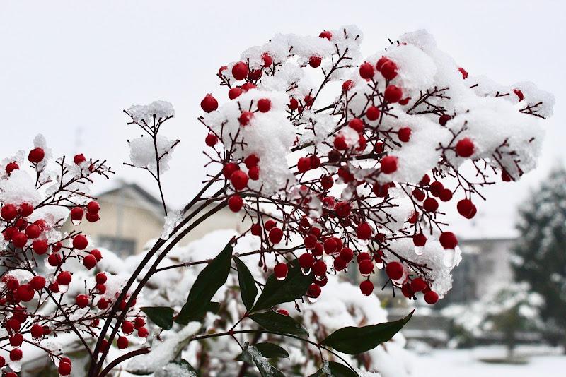 La natura non teme il gelo  di annabus58
