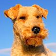 Dog Breeds, HD Catalog
