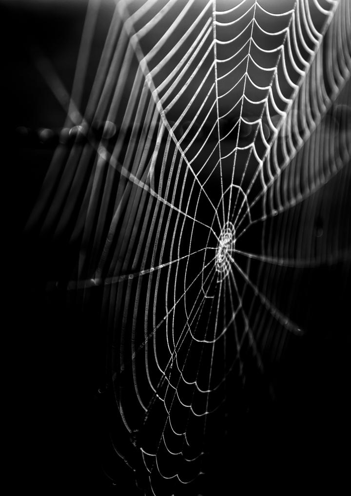 La tela del ragno di MicheleFaggian