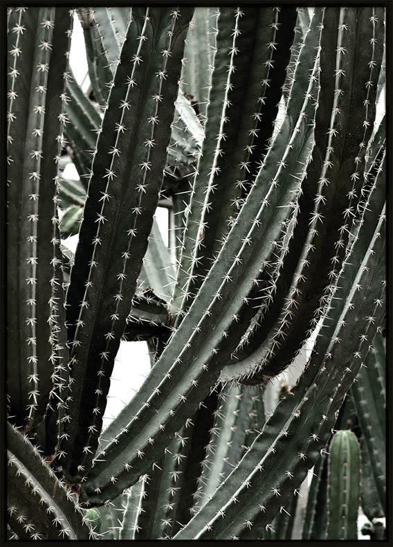 Poster, Green Cactus