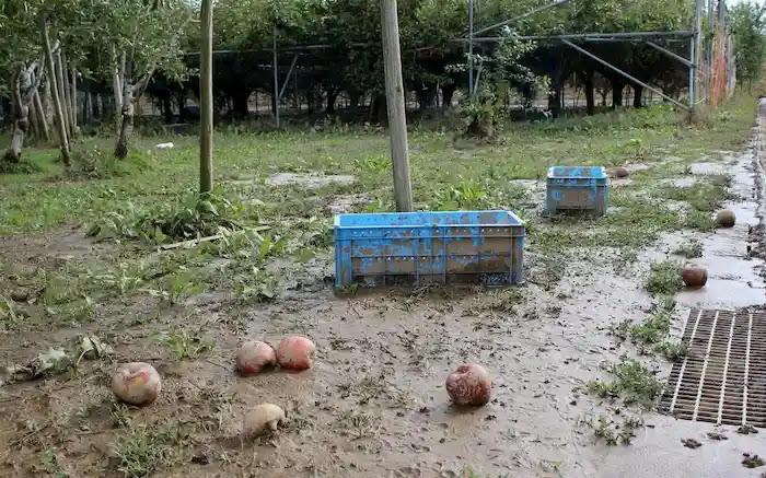 #被災地農家応援レシピ台風被害