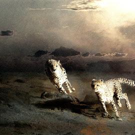The Hunt by Bjørn Borge-Lunde - Digital Art Animals ( wild animal, predator, cheetah, animals, big cats, nature, wildlife, africa )