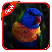 Wallpaper Bird