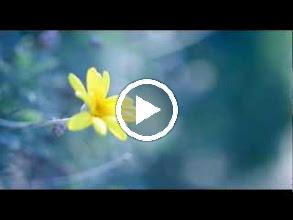 Video: A. Vivaldi  Il Gardellino, Op. 10 n. 3 - Concerto for flute, strings   b.c. in D major (RV 428) - I -