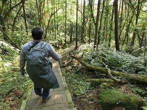 Photo: 好久沒走在杉木林間