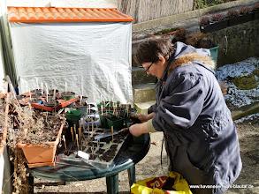 Photo: Tomatenaussaat ist abgeschlossesen.... jetzt werden die kleinen Sämlinge an die Sonne gewöhnt.