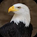 Eagle Sounds and Ringtone icon
