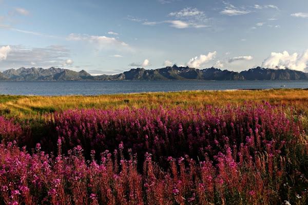 Le isole Lofoten di poglianiste