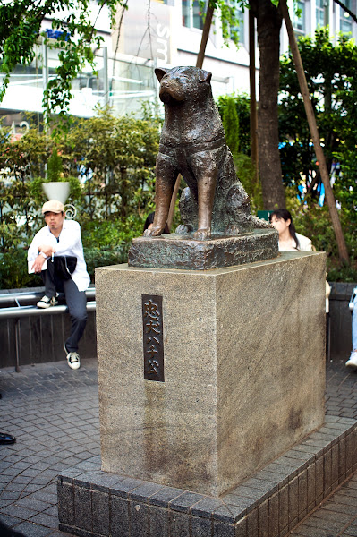 Photo: There's a charming little backstory behind this statue: http://en.wikipedia.org/wiki/Hachikō