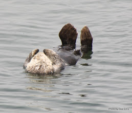 Photo: (Year 3) Day 20 - Otter Floating