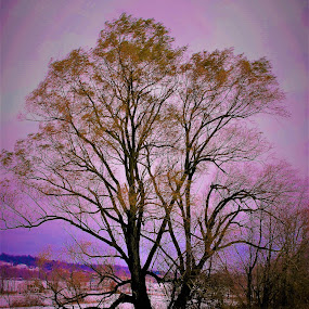 Tree with color by Paul S. DeGarmo - Nature Up Close Trees & Bushes ( contrast, tree, color, cloudy, day,  )