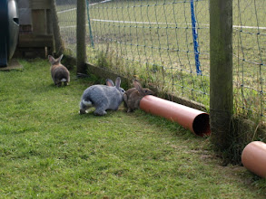 Photo: Binky, Bailey & Bunny