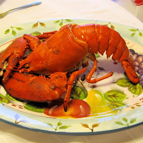 Lobster On A Turkey Platter by Sean Leland - Food & Drink Plated Food ( huge, platter, red, nova scotia, lobster, big claws, large lobster,  )