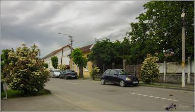 Photo: Photinia x fraseri - din Turda, Str. Mihai Eminescu - 2019.05.20