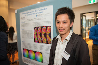 "Photo: Phong Nguyen, ""Examining zebrafish muscle stem cell clonal behaviors during homeostasis"""