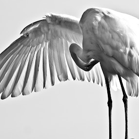 by Grayson Boxx - Animals Birds (  )