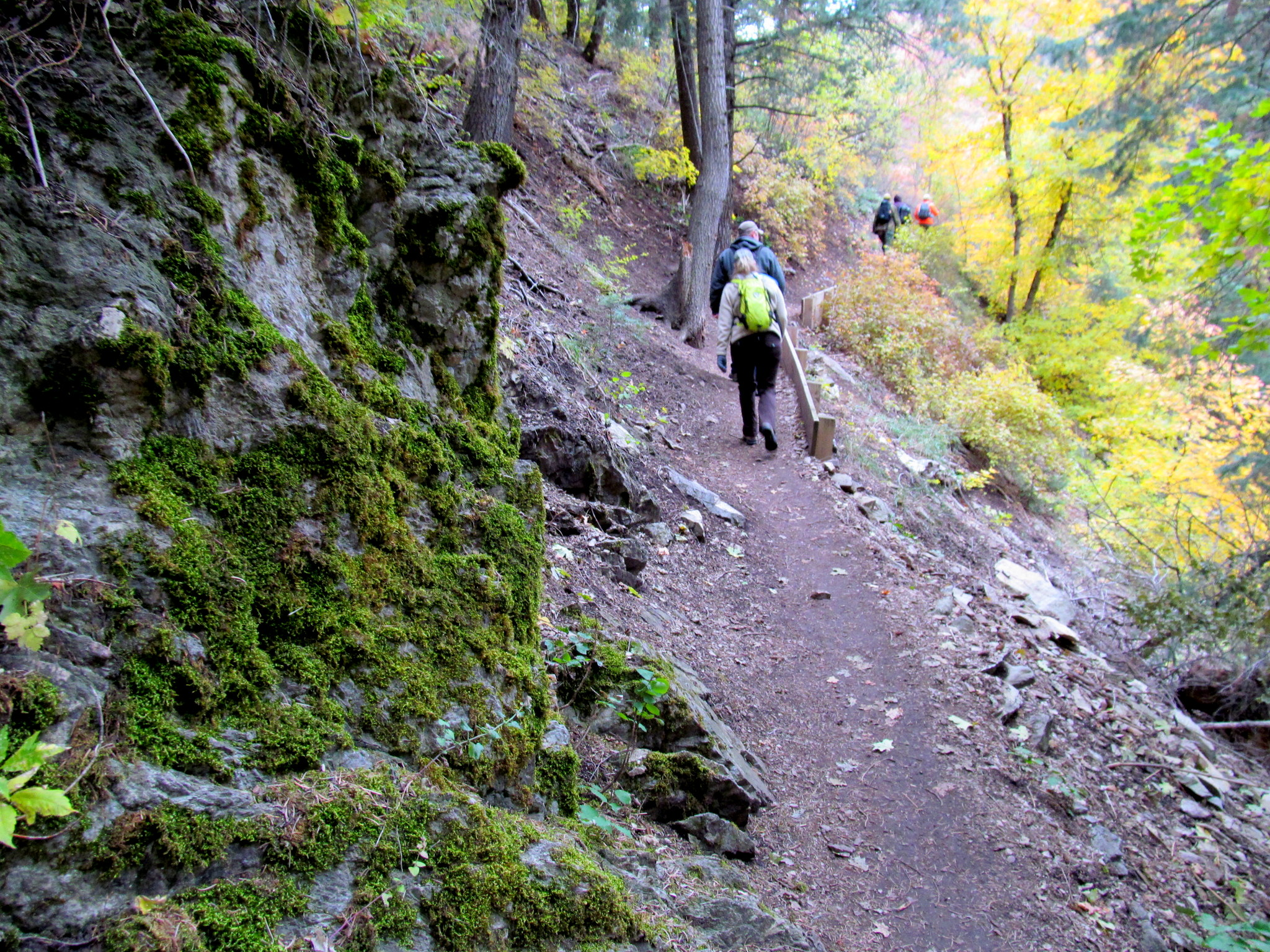 Photo: Moss along the trail