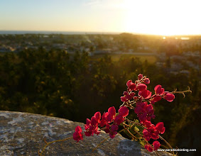 Photo: Sunset and pink blossom on the walls of the San Blas fort, overlooking downtown San Blas