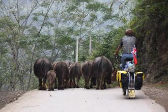 Photo: Day 241 - Rog and the Buffalo Backsides (Vietnam)