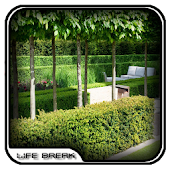 Modern Garden Hedges Design