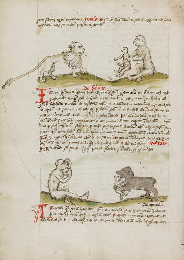 A Lion with a Monkey and his Young; A Monkey; A Bear Eating a Young Monkey