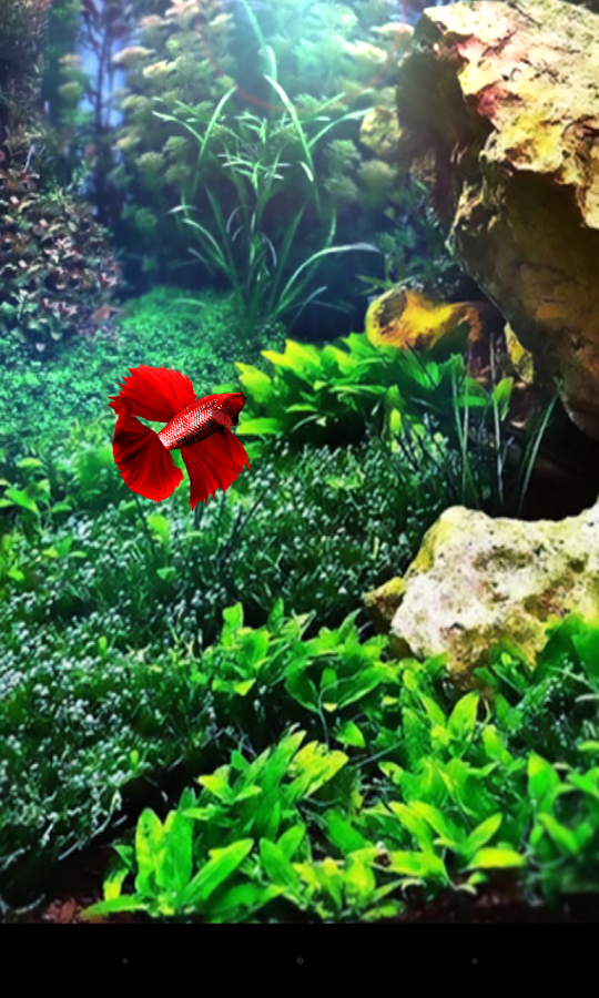 Red betta fish live wallpaper android apps on google play for Betta fish live wallpaper