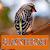 Master Kicau Blackthroat file APK Free for PC, smart TV Download