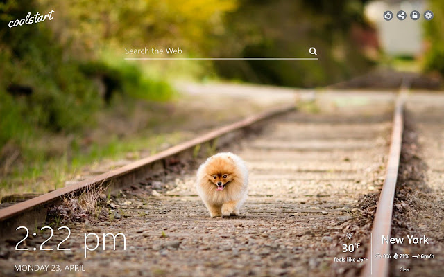 Pomeranian HD Wallpapers Dogs Puppies Theme