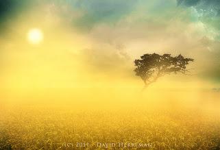 Photo: Gold Morning