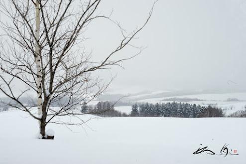 静かに佇む冬の美瑛の丘風景