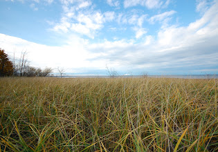 Photo: Grasslands at Rainbow Shores - on the Eastern side of Lake Ontario.