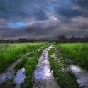 Rainy Field Live Wallpaper icon