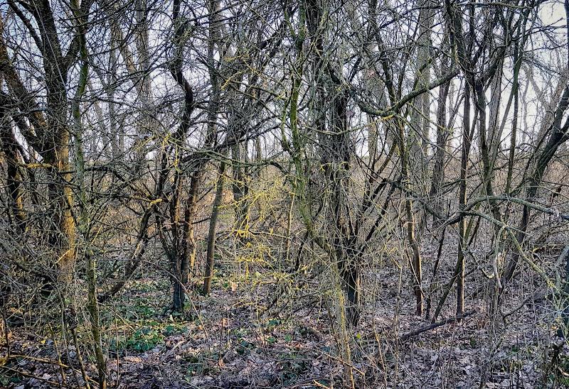 disordine nel bosco di Fotodiale