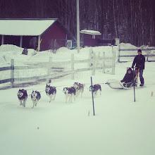 Photo: #DescubriendoQuebec #traineau à #chiens #Outaouais #EscapadeEskimo