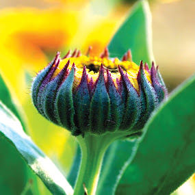 Tender Care by Sanjeev Leihao - Nature Up Close Flowers - 2011-2013 ( young & vibrant )