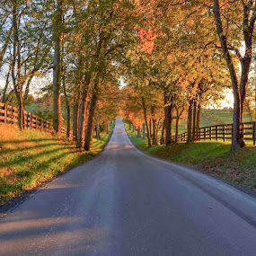 Horse Country by Jim Dawson - Novices Only Landscapes ( fence. backroads. kentucky. farms. golden hour. sunset. autumn. october.,  )
