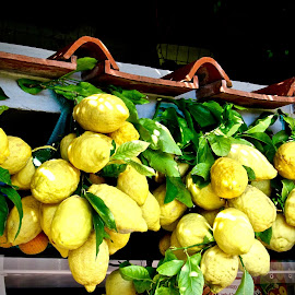 Limoni di Sorrento by Michael Villecco - Food & Drink Fruits & Vegetables (  )
