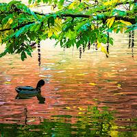 Riflessi e colori dell'autunno di