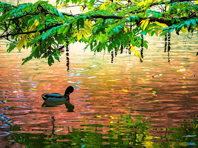 Riflessi e colori dell'autunno di alagnol