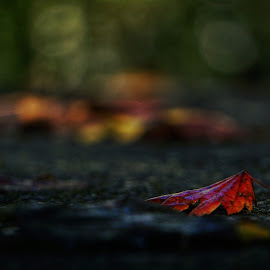 Red  by Todd Reynolds - Nature Up Close Leaves & Grasses